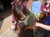 Sawyer with Hawthorne the Corn Snake