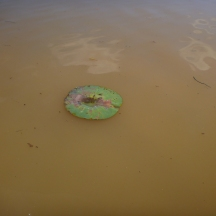 One loan lily pad