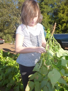 Sawyer picking green beans