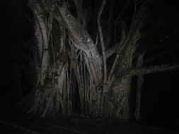 Haunted trees!!