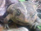 Hello, Mr. Toad