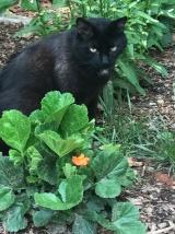 Jersey in his garden
