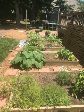Our little vegetable garden