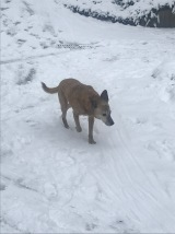 Cinnamon played in the snow too