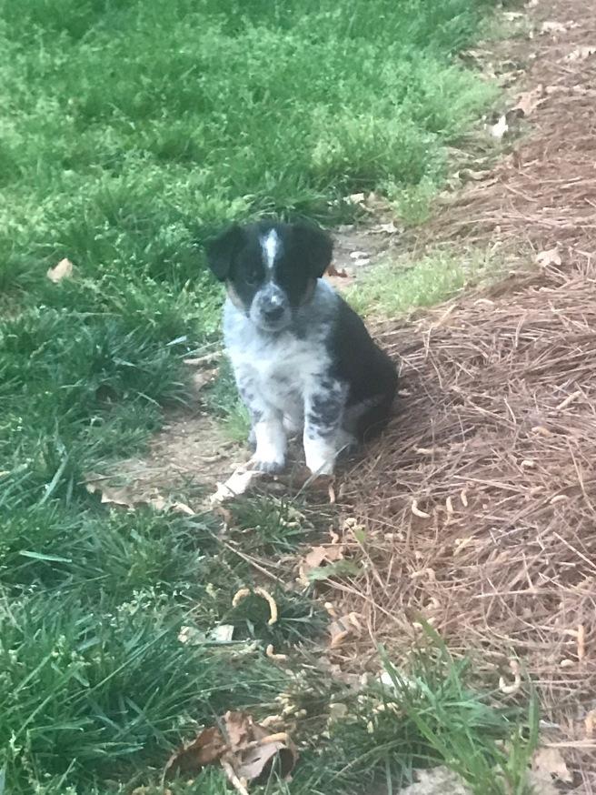 Bella 9 weeks old