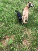 Puppies playing in the field
