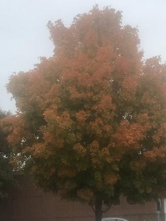 Beautiful leaves!