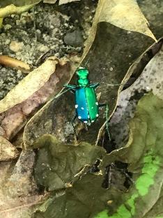 A cool beetle
