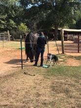 Visiting the barn